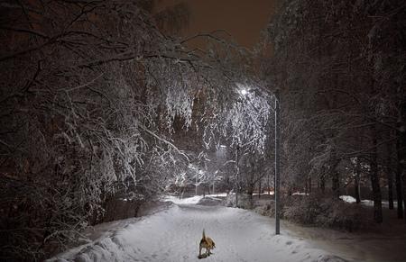 Собака под снегом