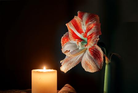 Цветок и свеча